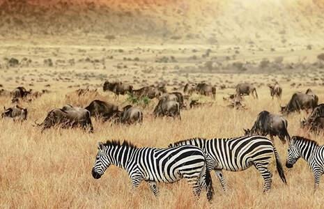Heiraten in Kenia